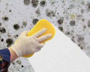 Mould Cleaners